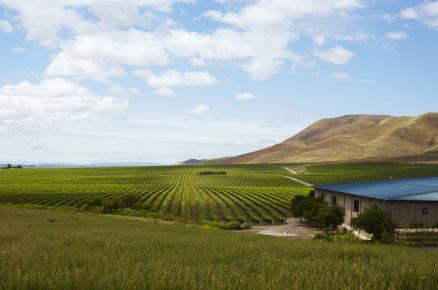 green vineyard, winery