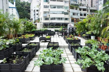 Rooftop Gardens   Ecozine