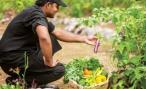 The 180 local staff are able to cultivate food from the garden for their families